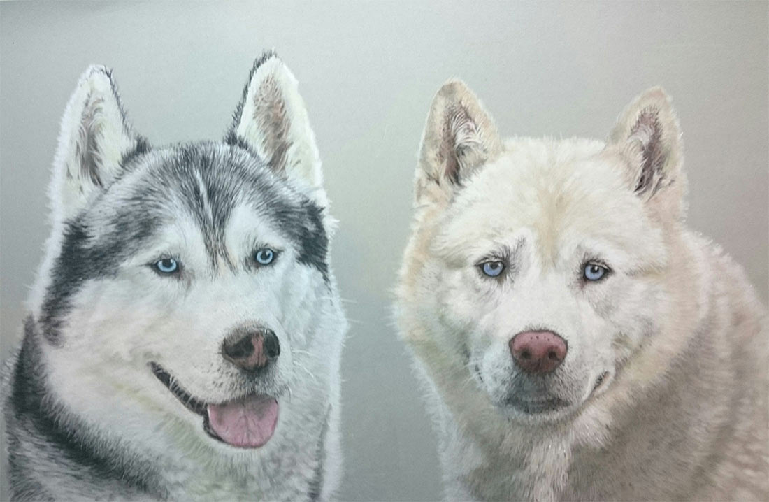huskie-pastel-dog-portraits