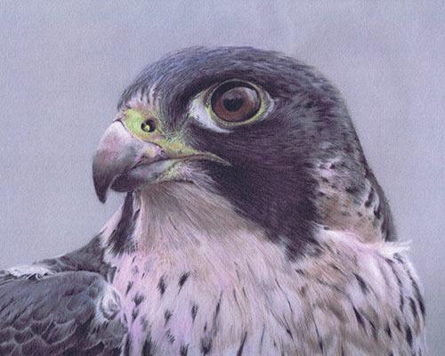 pastel-bird-portraits
