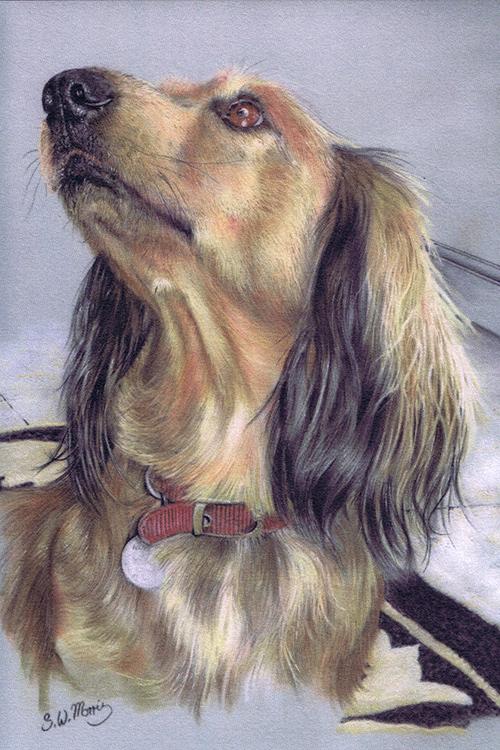 pastel-dog-portraits