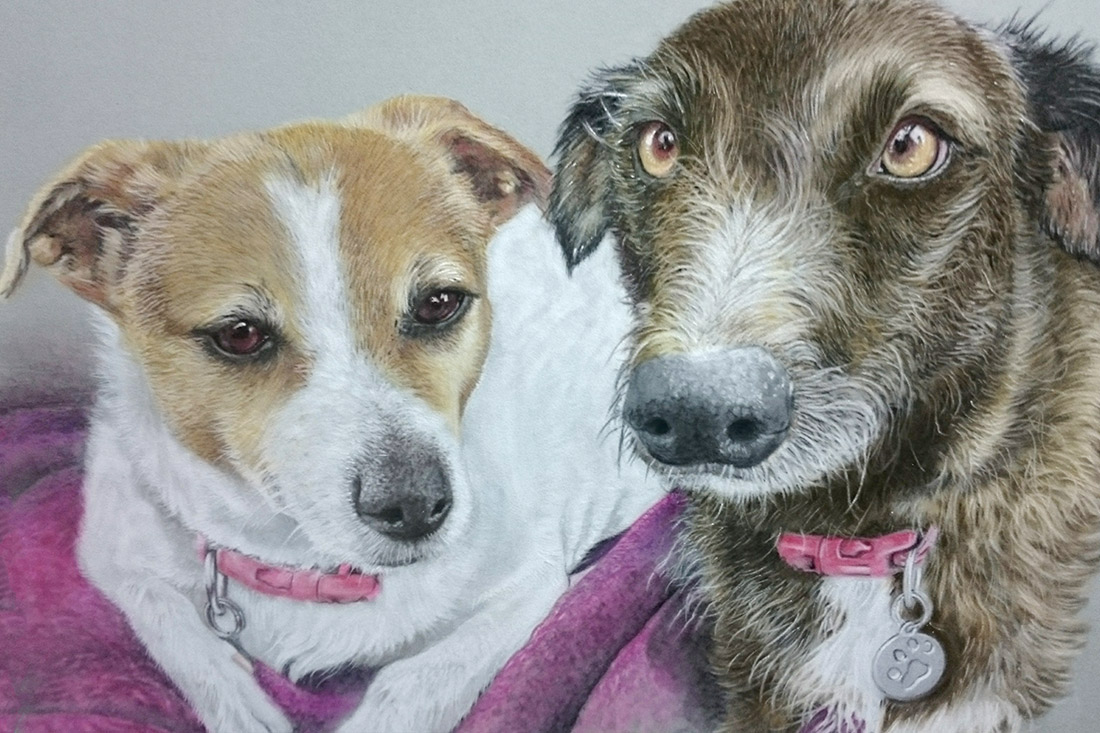 two dog pet portraits