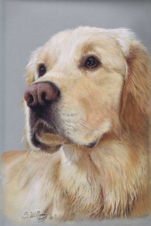steve-morris-pet-portraits