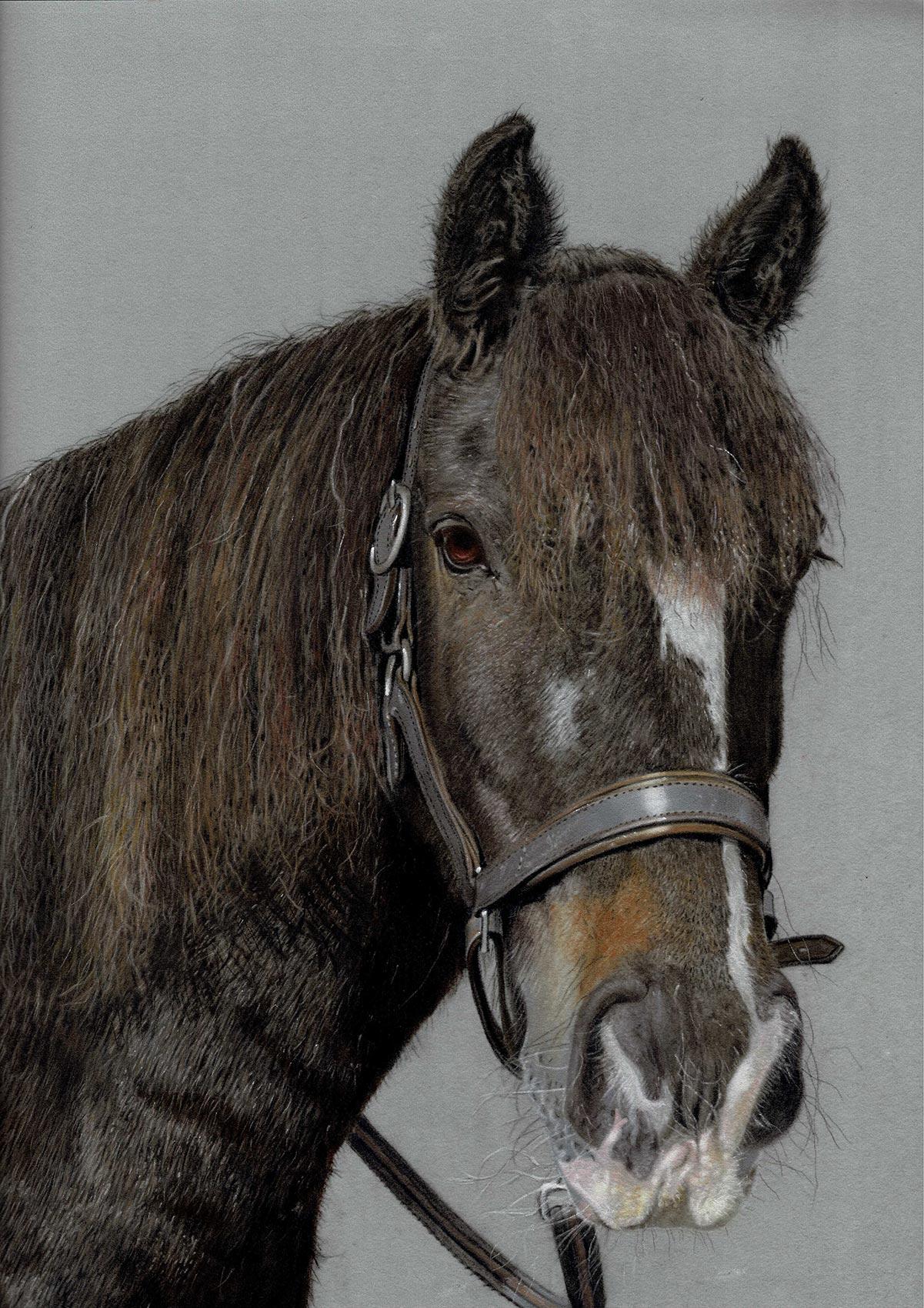 eve-morris-pastel-horse-portrait