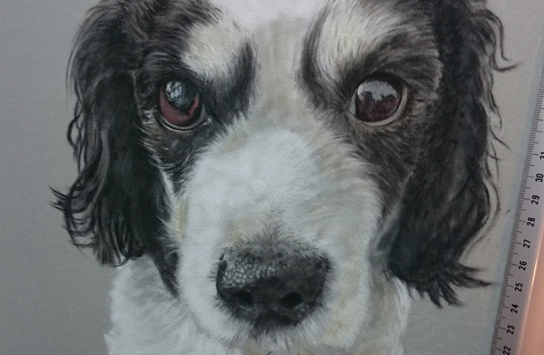 the-eyes-pastel-dog-portraits
