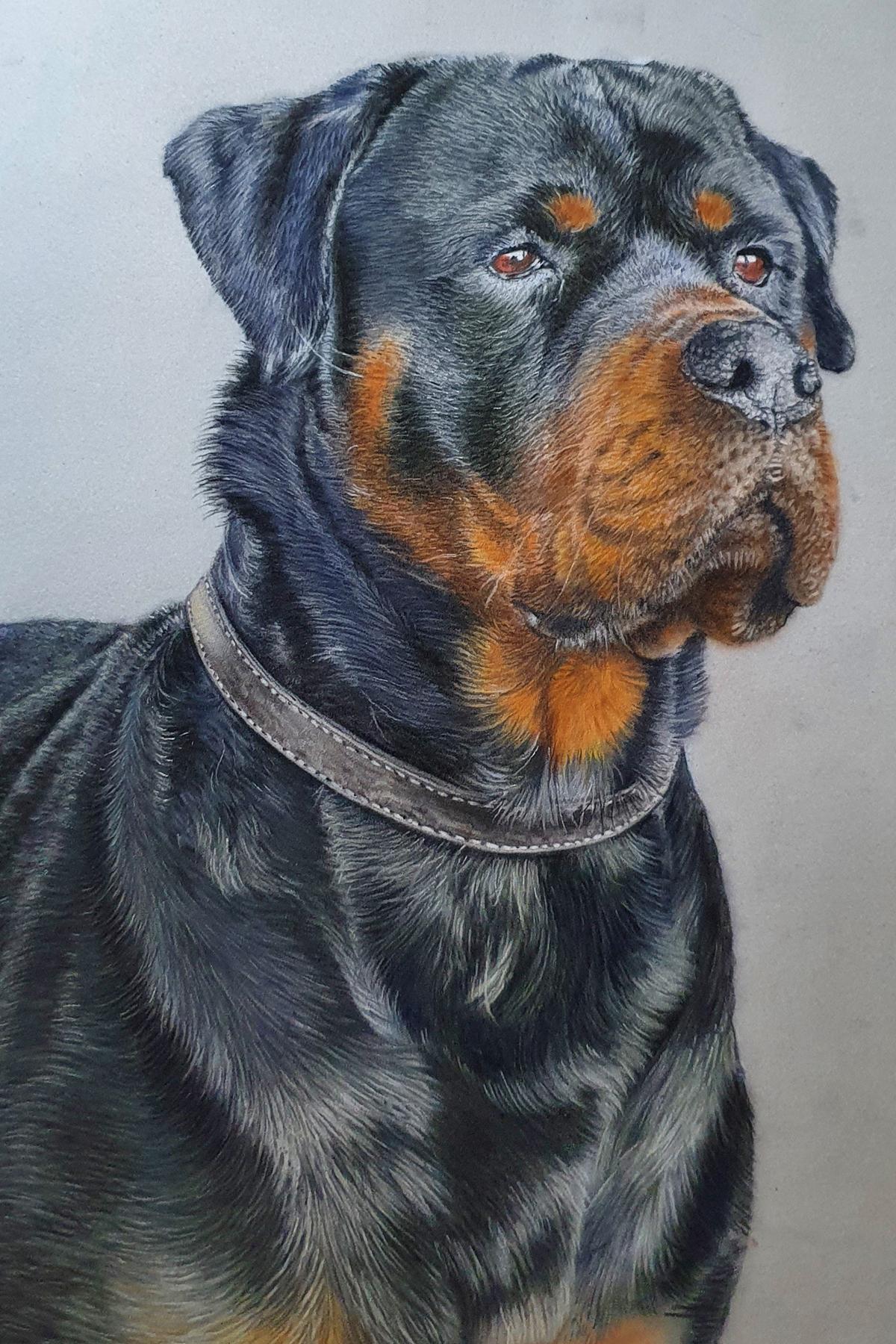 Pet portraits 2021 Steve Morris
